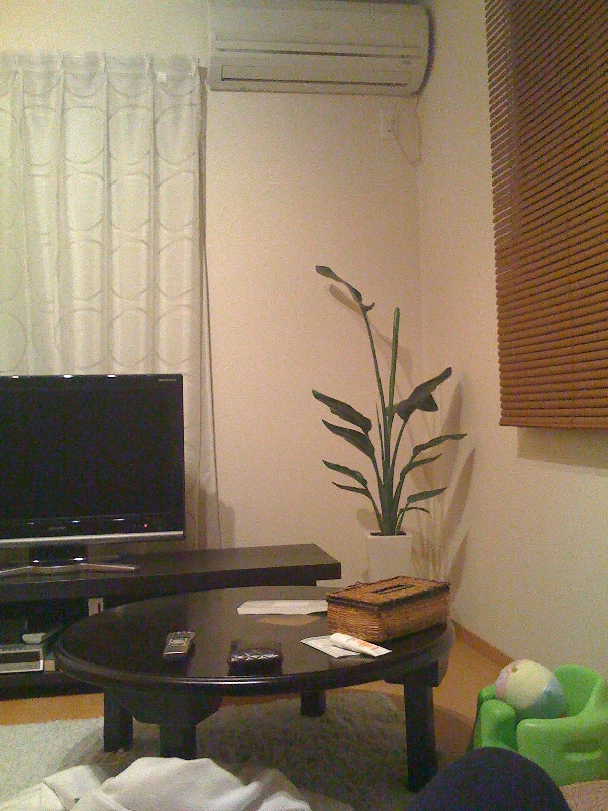 観葉植物があったころ
